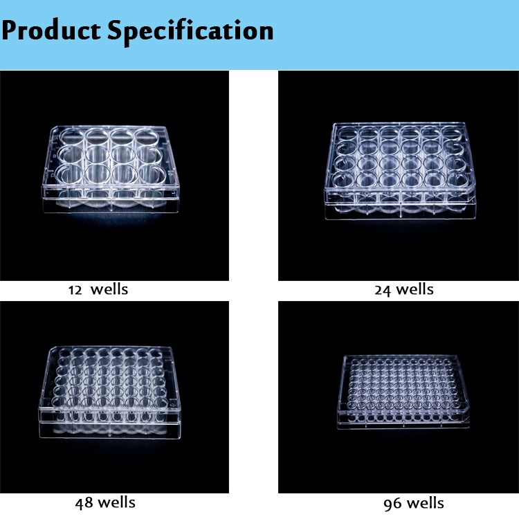 Medical Disposable Plastic 6 12 24 48 96 Well Cell Culture Plate