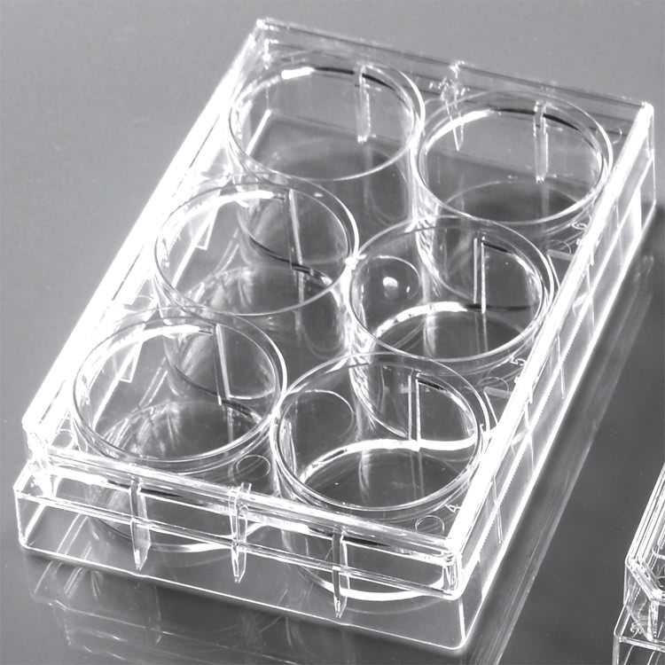 AMA 6 well cell culture plate (Advanced Carboxyl treated)